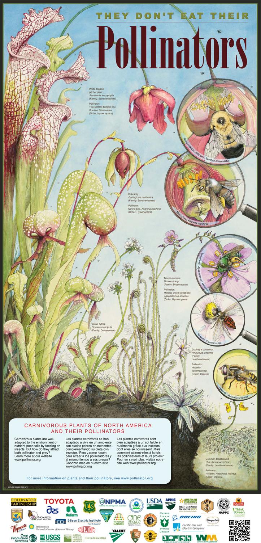 Brand New 40pc Dionaea Muscipula Venus Fly Trap Carnivorous Plant Seeds CA